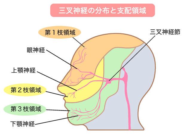 三叉神経(視神経・上顎下顎神経)