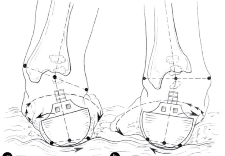 尾骨を触る理由~形状が特殊なかかと