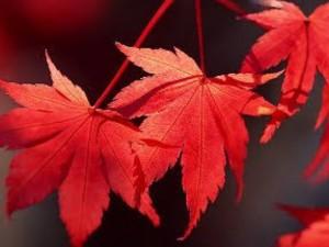 京都の紅葉は本当にキレイなのか?