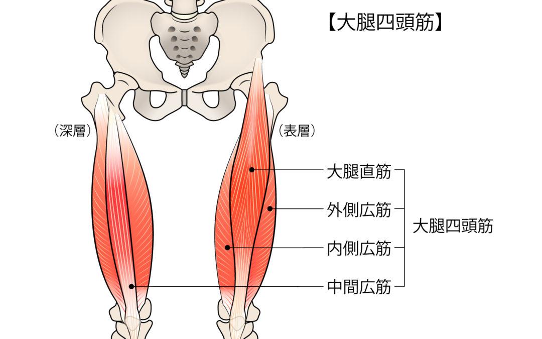GYMBA 大腿四頭筋